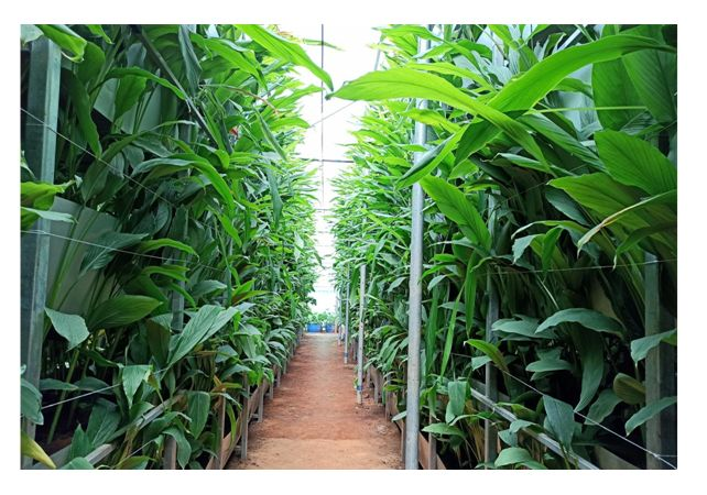 A S Agri and Aqua LLP – Pioneering Force behind Hi-Tech Soil-Based Vertical Farming in India
