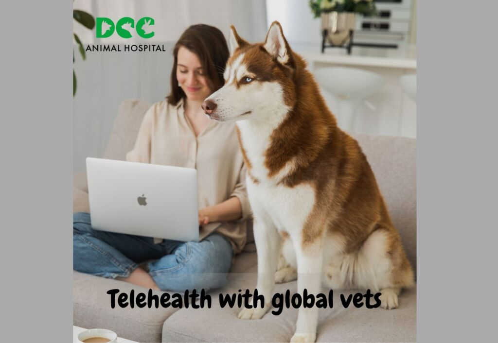 DCC Animal Hospital extends Telehealth services across India to support pet healthcare as a priority no matter where you are