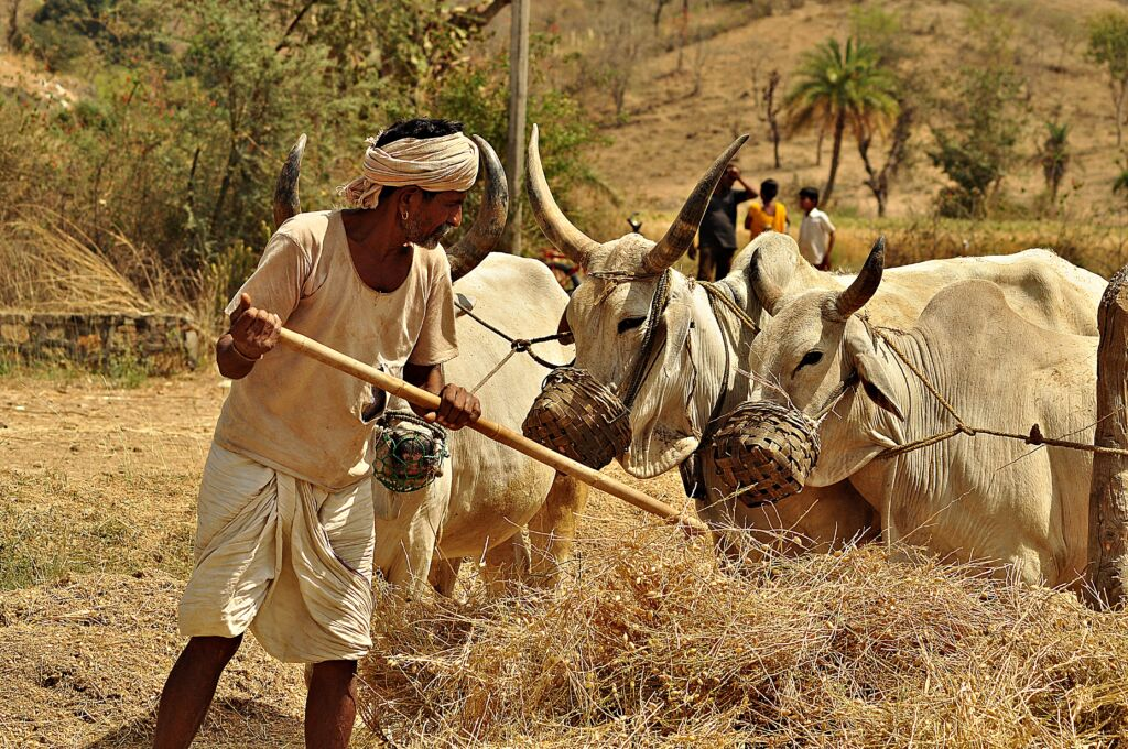 75th Independence Day: A Farmer's Plight in an Agrarian Nation